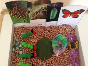 caterpillar_sensory_bin