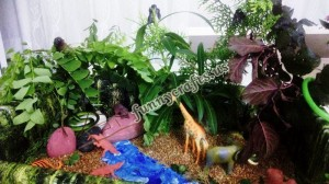 how_to_make_rainforest_in_a_shoebox