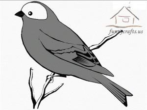 grey_bird