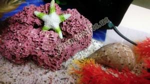 ocean_sensory_play_ideas_for_kids