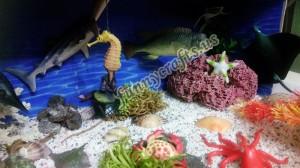 ocean_sensory_pool