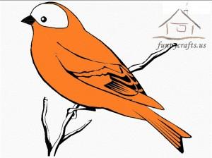 orange_bird