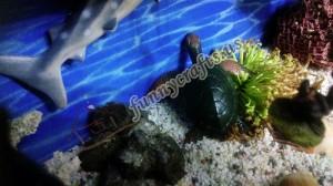 preschool_ocean_animal_activities