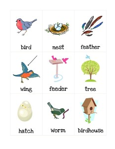 birds word worksheets