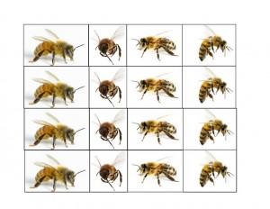 bugs activities bee cards