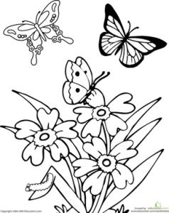 butterfly coloring kındergarten