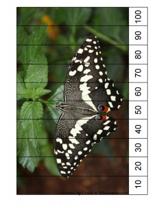 butterfly number puzzle