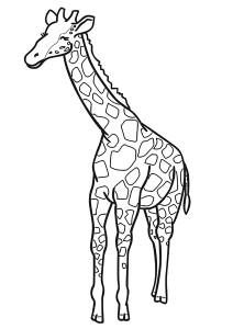 crocodile giraffe