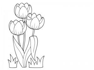 spring coloring page tulip