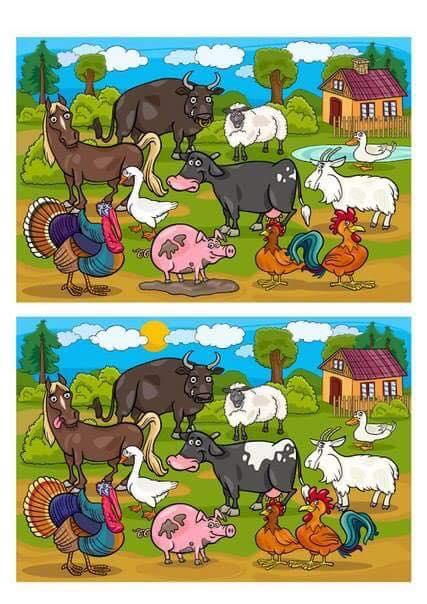 Between The Two Pictures Find the difference between two images (14 ...