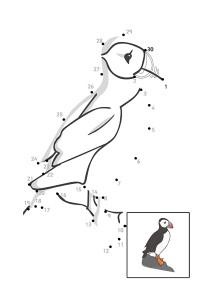 bird dot to dot activities