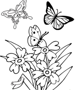 butterfly coloring pages (1)