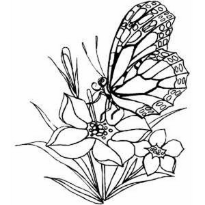 butterfly coloring pages (3)