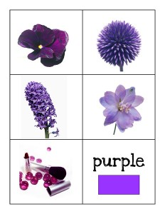 color cards purple