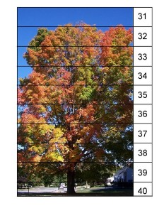 fall-autumn worksheets sequence puzzle activity