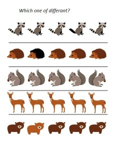 forest animals which one of diffferant