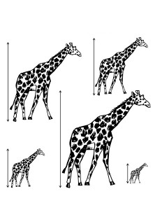 giraffe measuring printables