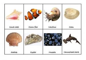 ocean animals match activities