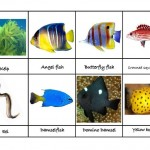 Ocean Animals Activities
