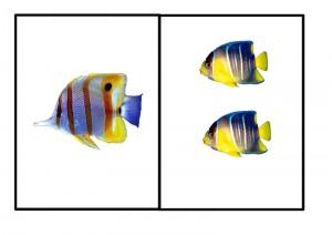 ocean animals number activity