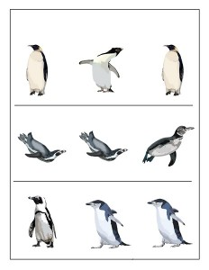 penguin pictures