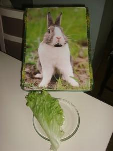 the bunny feed activity (3)