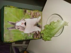 the bunny feed activity (4)
