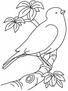 bird themed coloring pages (24)
