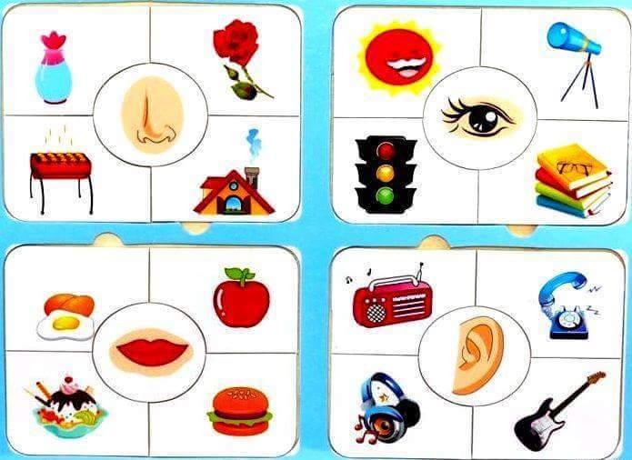 Five senses flashcards » five senses cards printables for kıds (4)