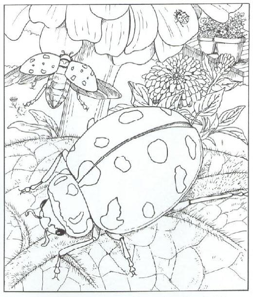 ladybug spring mandala coloring pages 8 funnycrafts. Black Bedroom Furniture Sets. Home Design Ideas