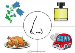preschool five sense worksheets (13)