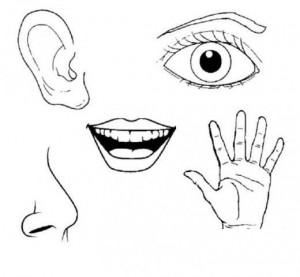 preschool five sense worksheets (2)