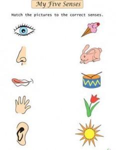 preschool five sense worksheets (9)