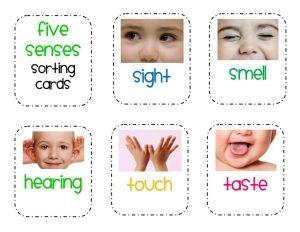 five senses sorting  printables (1)