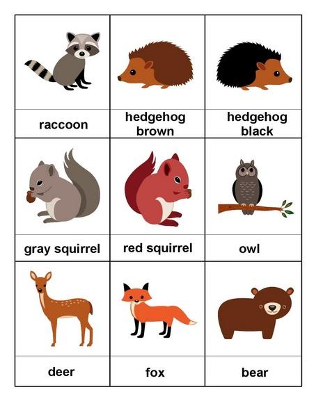 forest animals cards 1 funnycrafts