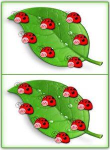 ladybug counting activity (3)