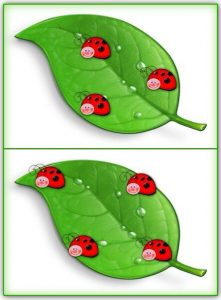 ladybug counting activity (4)