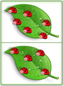 ladybug counting activity (7)