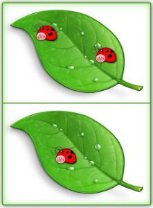 ladybug counting activity (8)