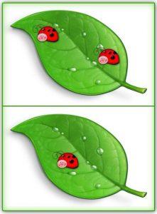 ladybug counting activity (8)