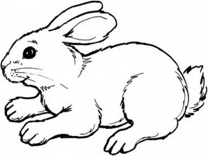 rabbit coloring pages (4)