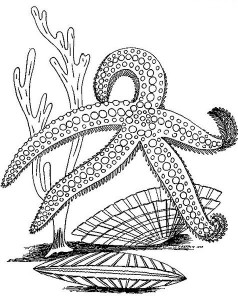 starfish coloring pages for kids (3)