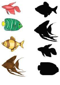 fish shadow matching