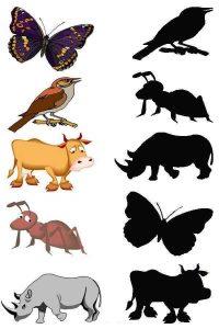 shadow matching sheet animals