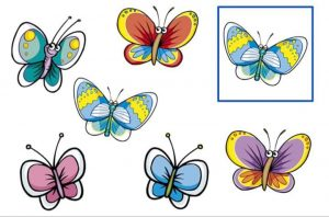 Find out the same butterflies