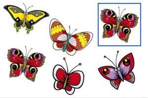 Find out the same butterfly