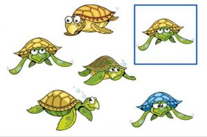Find out the same sea turtle