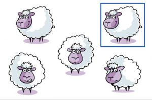 Find out the same sheep