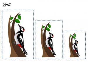 bird size sequencing