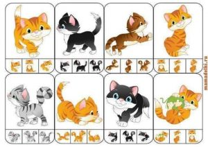 find out the same cats